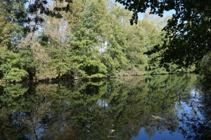 Fisherman's Dream :  Plot On The Charente River Between Verteuil And Ruffec